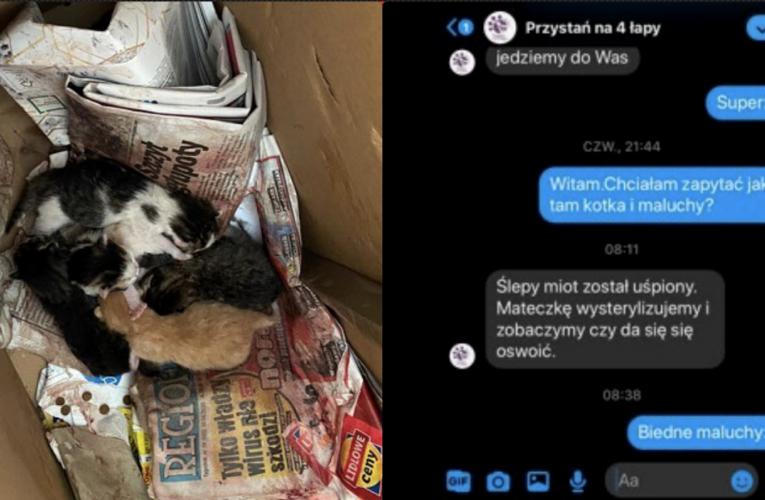 W fundacji, zajmującej się ochroną zwierząt, uśpiono ślepy miot kociąt. Nie wiadomo jaki los spotkał ich matkę