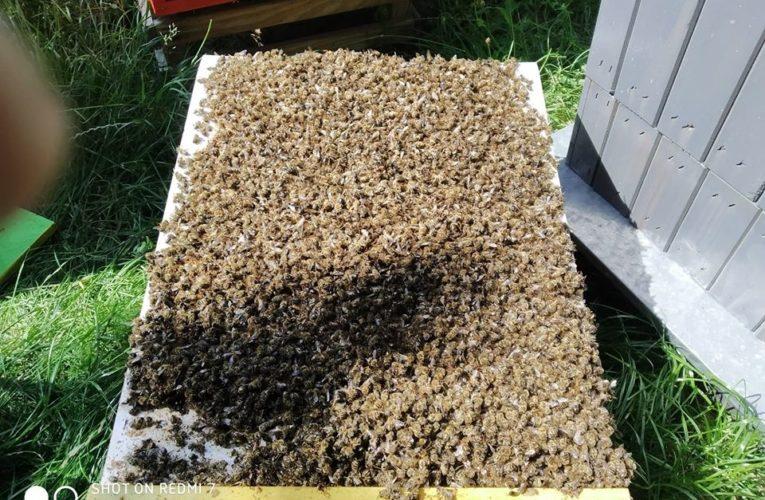 Martwe pszczoły w pasiece. Dramatyczny post Pawła Kukiza