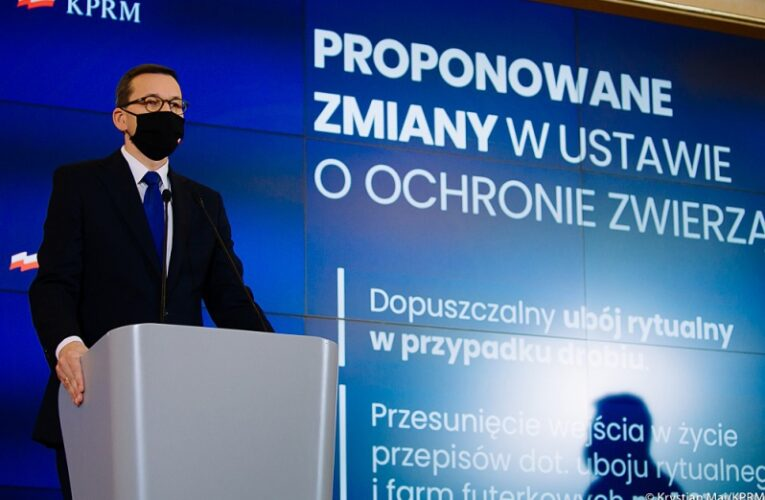 Premier o zmianach w ustawie o ochronie zwierząt: Tak kształtujemy warunki hodowli, by wspierać rozwój polskiego rolnictwa