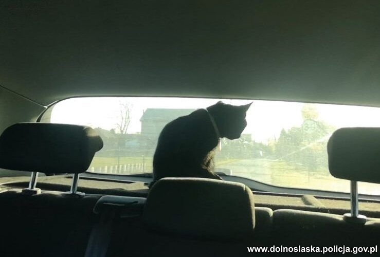 Pasażer na gapę w policyjnym radiowozie