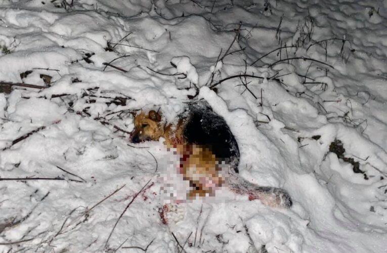 Siedlęcin: Bestialsko zamordowany pies. Ktoś zrzucił zwierzę z wiaduktu kolejowego