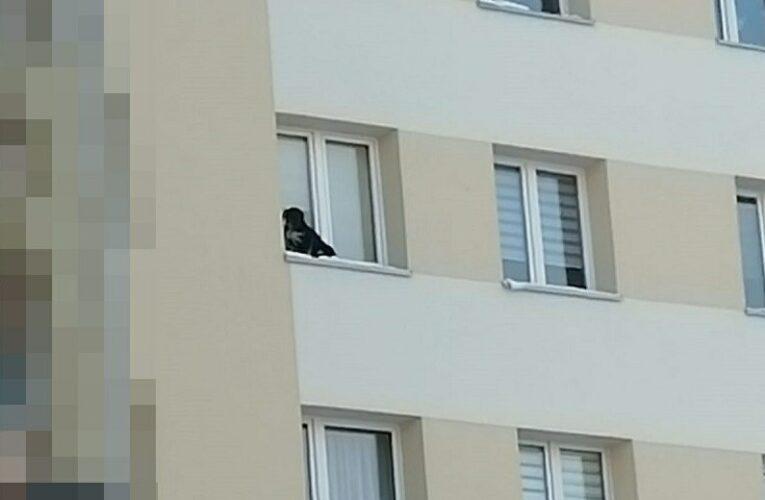 Wystawił psa na parapet na 9 piętrze i zamknął okno. 32-latek ma trafić do więzienia